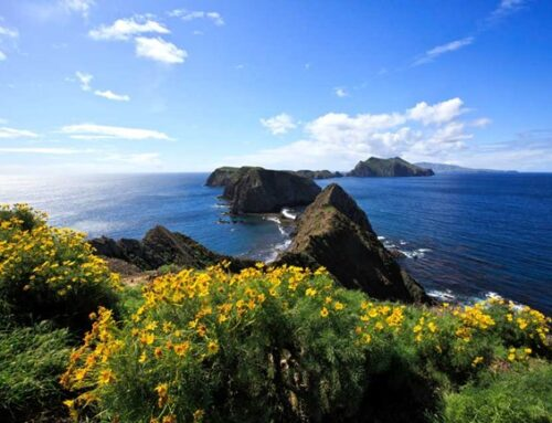 Anacapa Island Landing Cove dock to be replaced